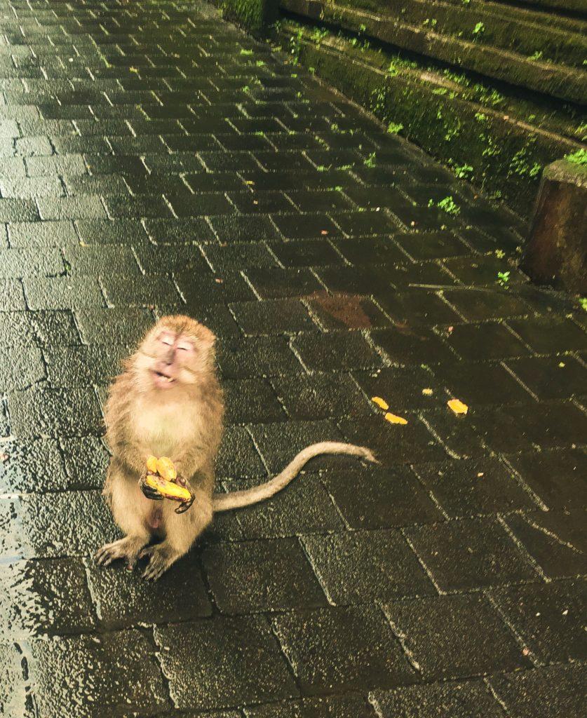ubud bali monkeys