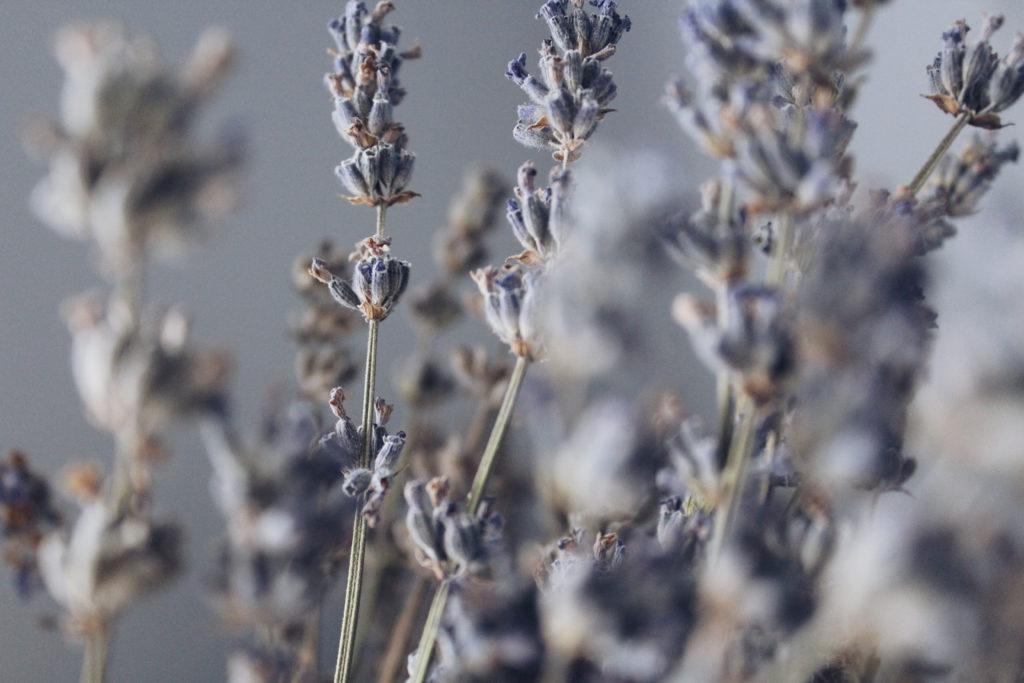 lavender travel stress